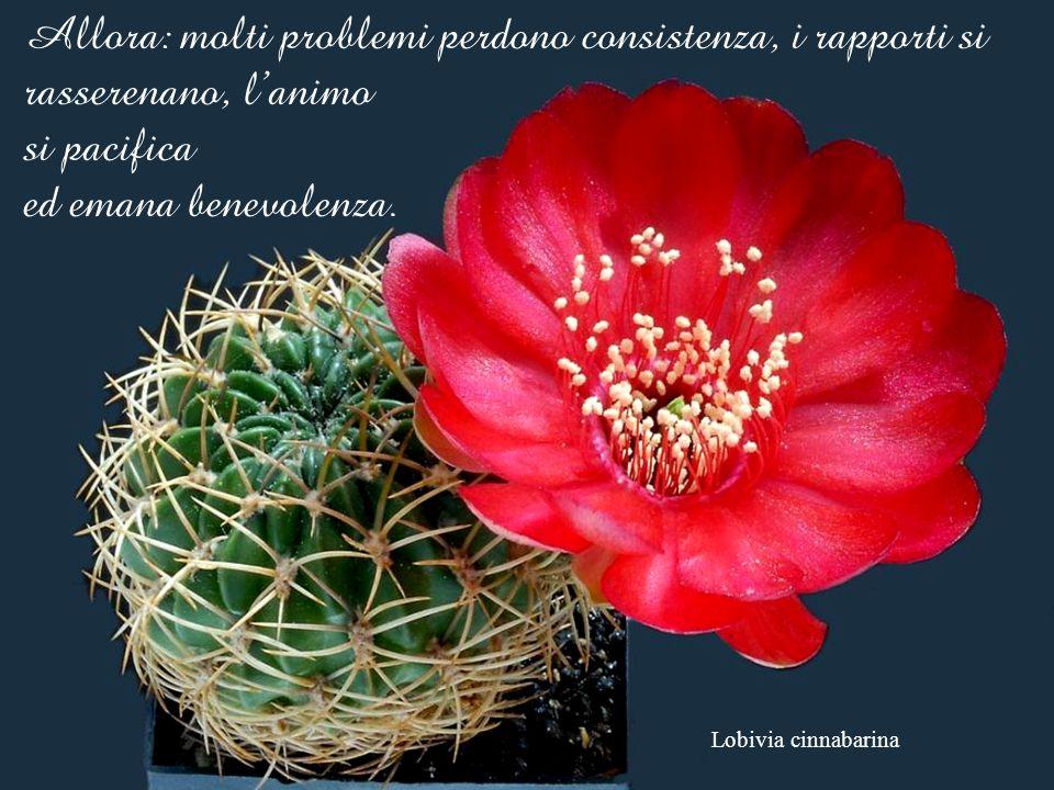 Allora: molti problemi perdono consistenza, i rapporti si rasserenano, l'animo si pacifica ed emana benevolenza.