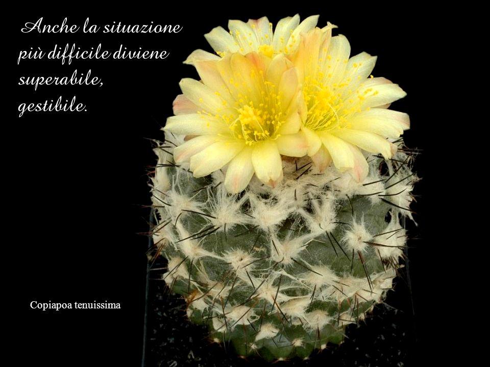 Anche la situazione più difficile diviene superabile, gestibile.
