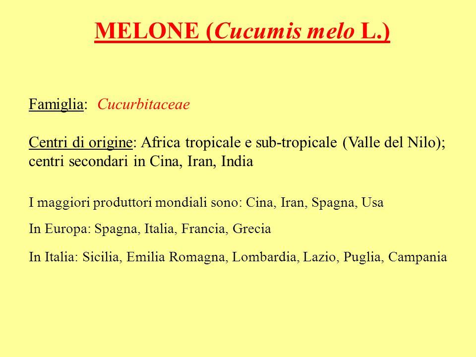 MELONE (Cucumis melo L.)