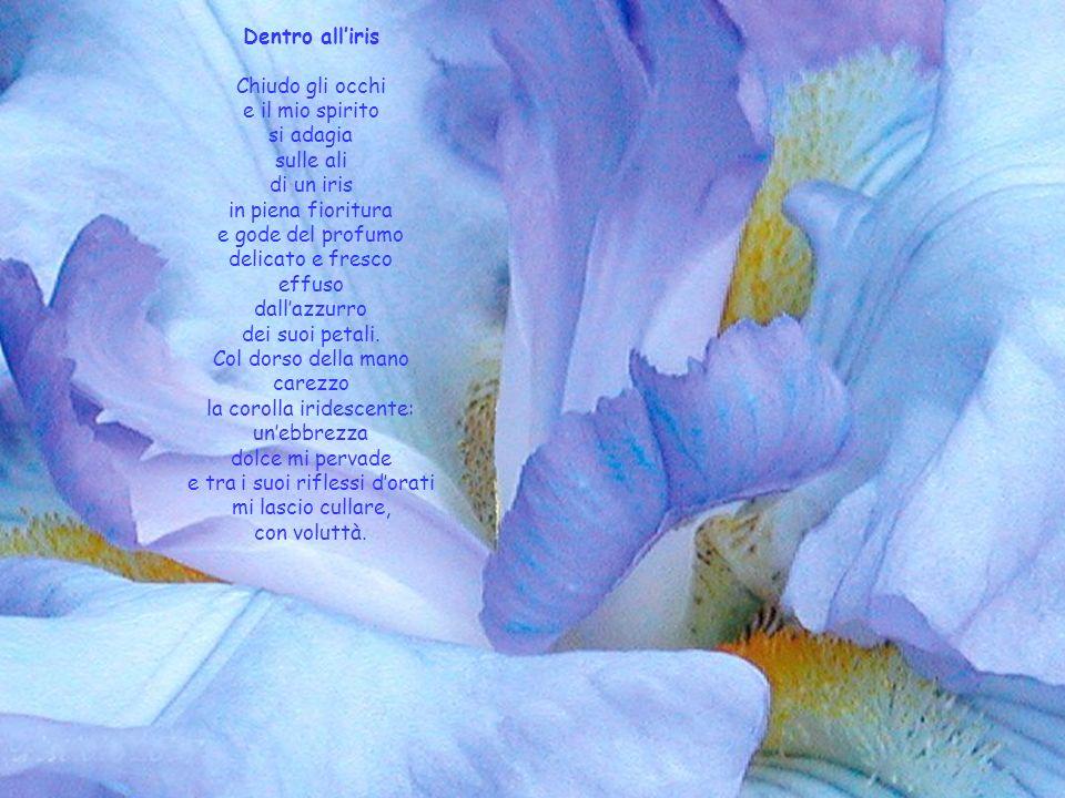 la corolla iridescente: un'ebbrezza dolce mi pervade
