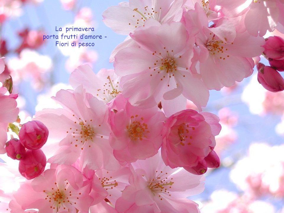 La primavera porta frutti d'amore - Fiori di pesco
