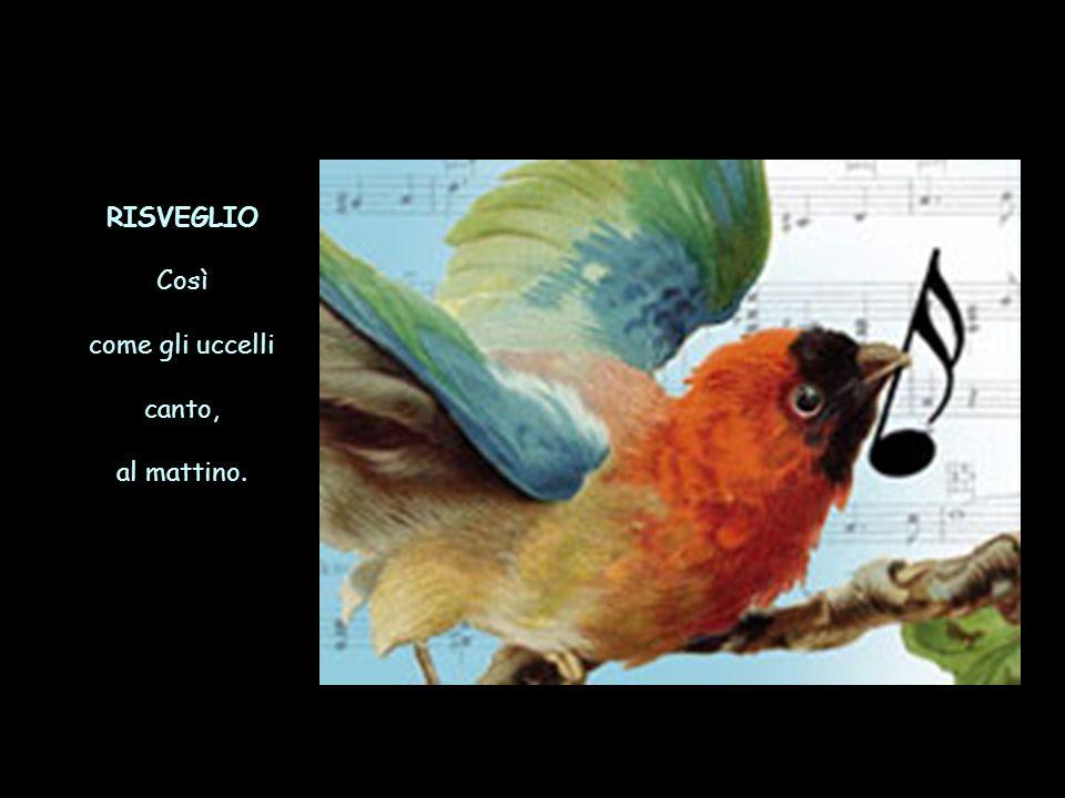 RISVEGLIO Così come gli uccelli canto, al mattino.