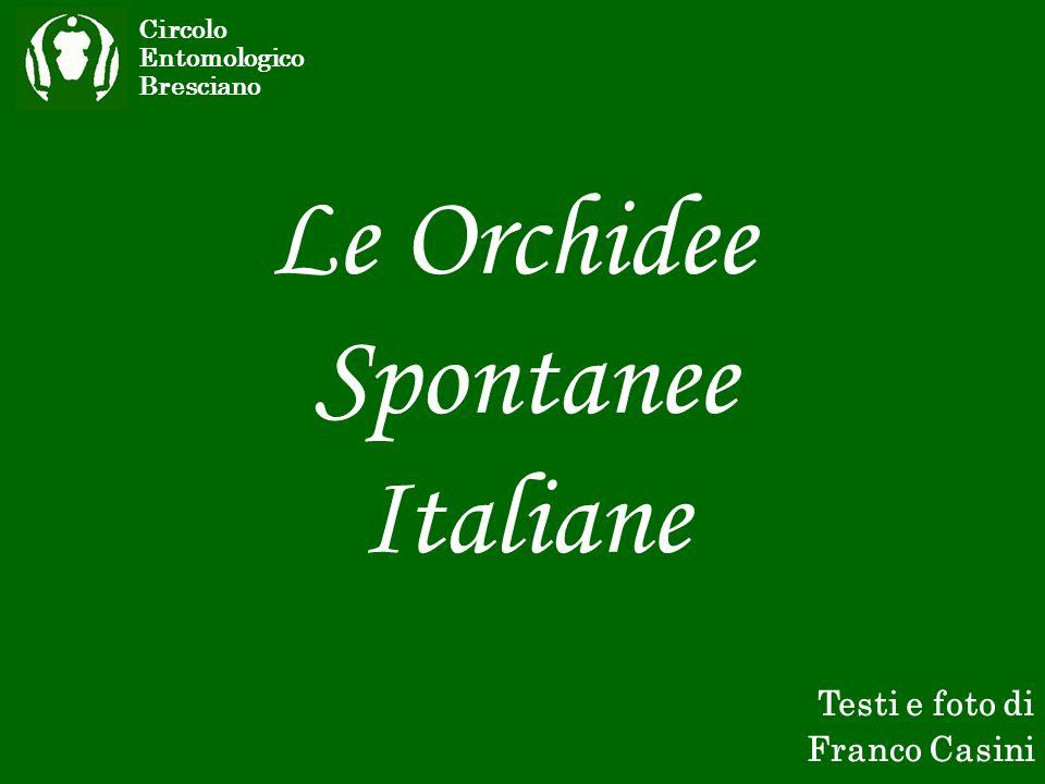 Le Orchidee Spontanee Italiane Testi e foto di Franco Casini Circolo