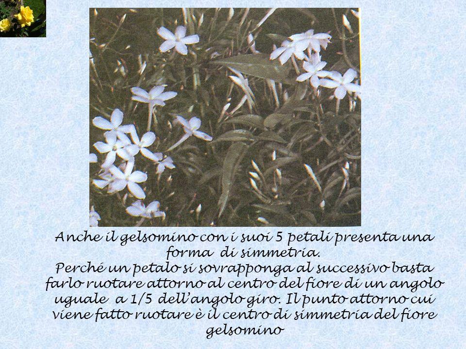 Anche il gelsomino con i suoi 5 petali presenta una forma di simmetria