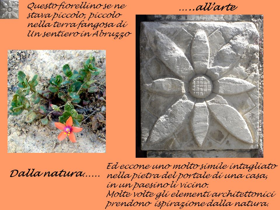 …..all'arte Dalla natura…… Questo fiorellino se ne