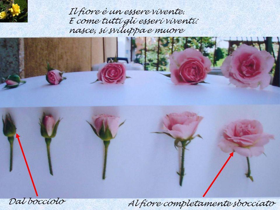 Il fiore è un essere vivente.