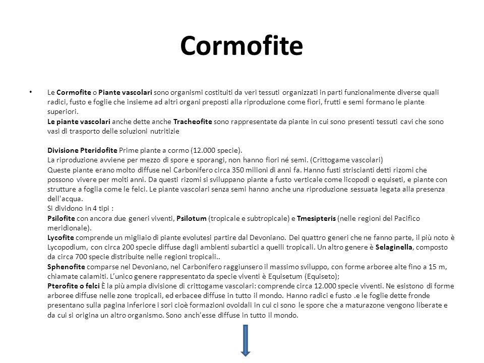 Cormofite
