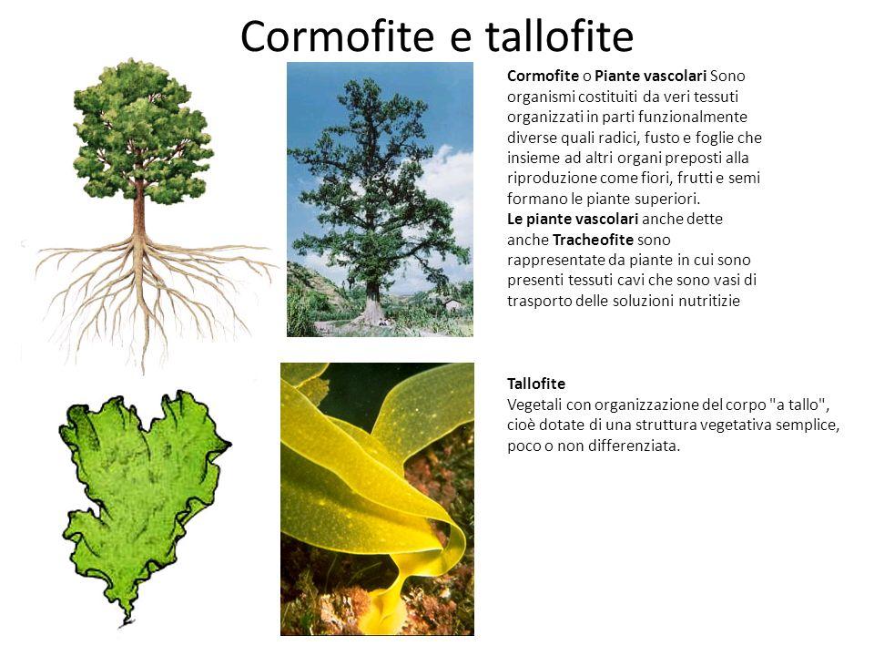 Cormofite e tallofite