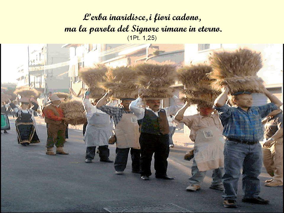 L'erba inaridisce, i fiori cadono, ma la parola del Signore rimane in eterno. (1Pt. 1,25)