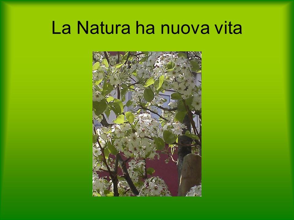 La Natura ha nuova vita