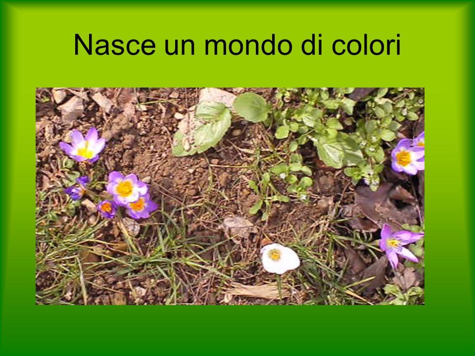 Nasce un mondo di colori