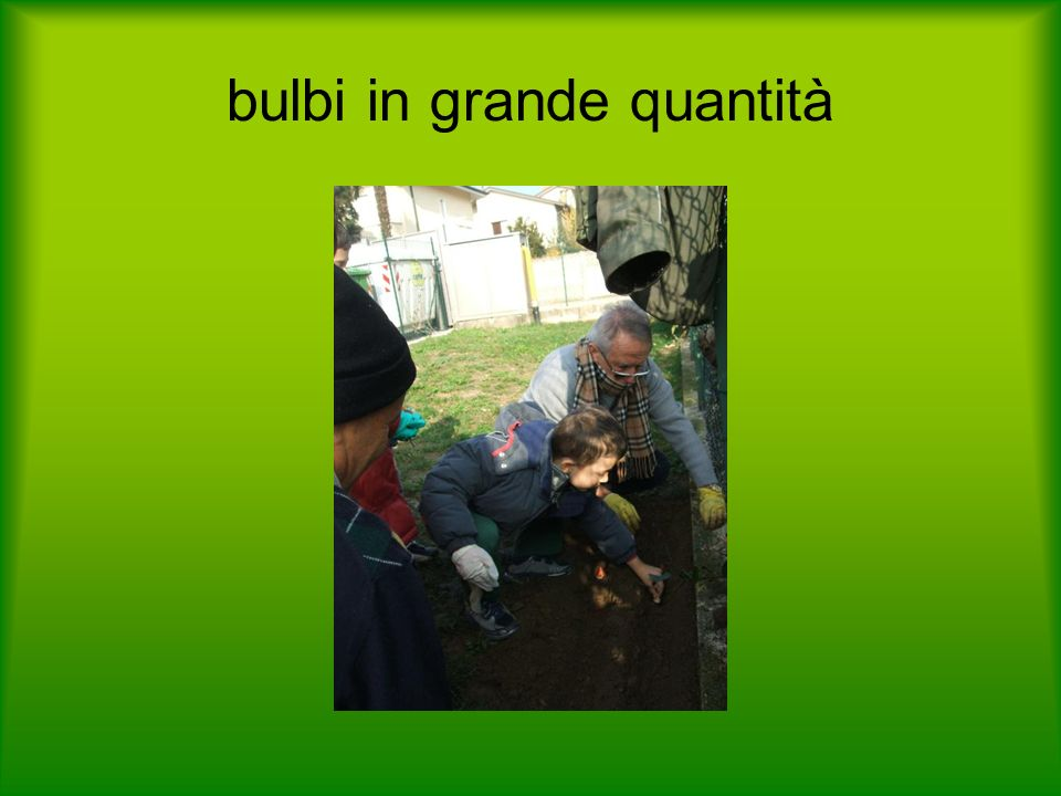 bulbi in grande quantità