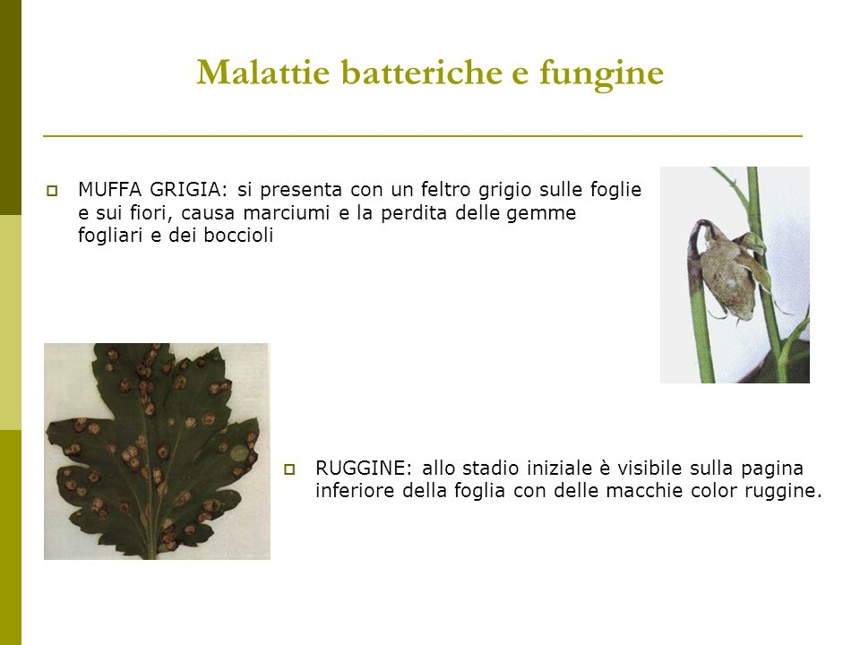 Malattie batteriche e fungine