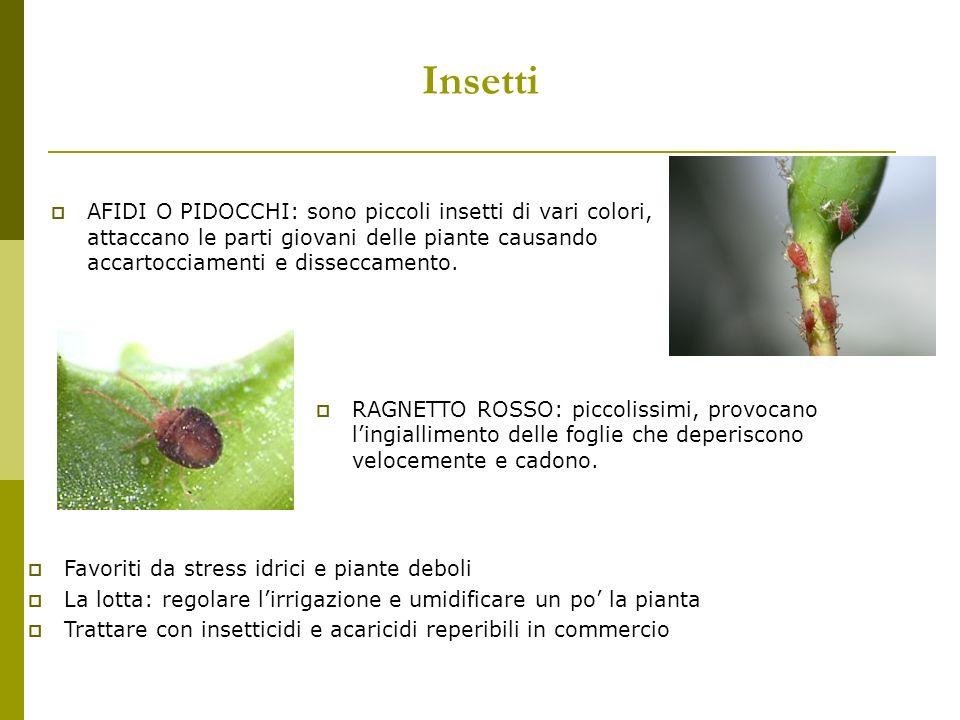 Insetti AFIDI O PIDOCCHI: sono piccoli insetti di vari colori, attaccano le parti giovani delle piante causando accartocciamenti e disseccamento.