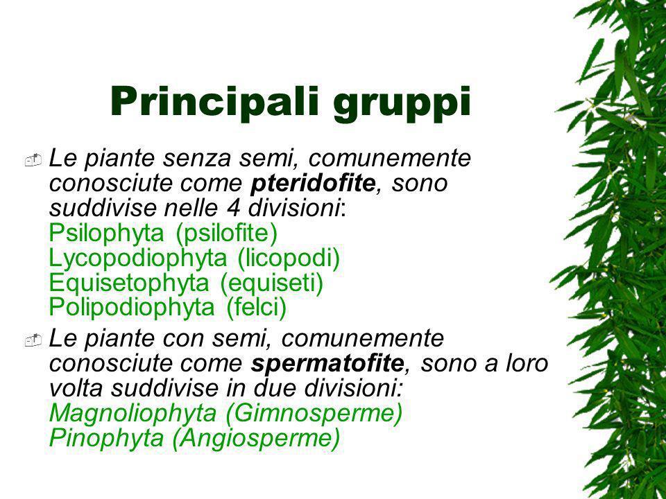 Principali gruppi