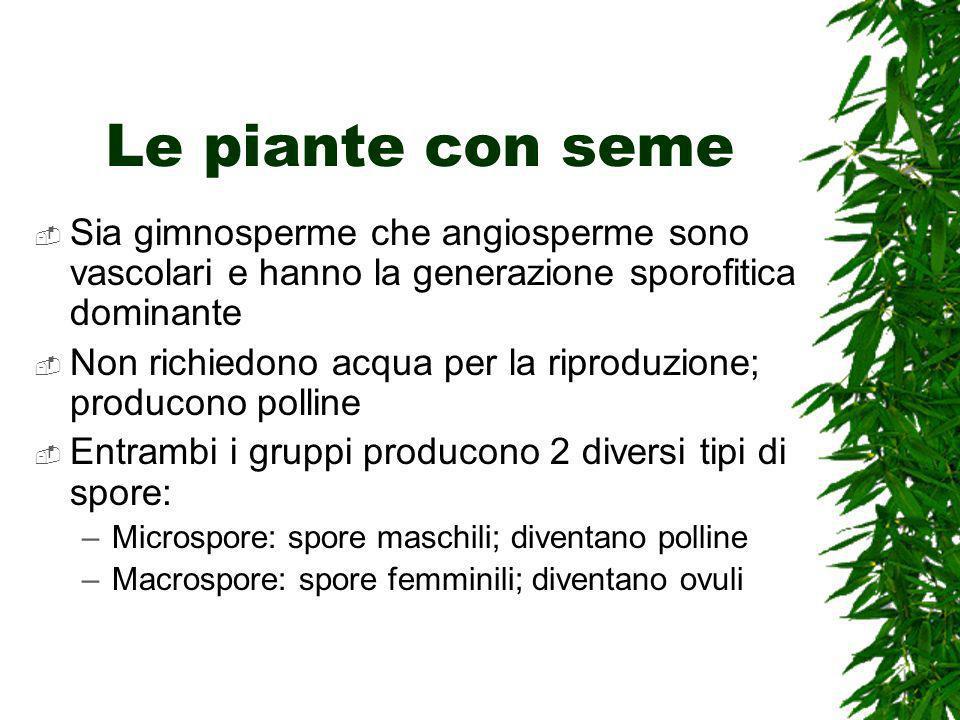 Le piante con seme Sia gimnosperme che angiosperme sono vascolari e hanno la generazione sporofitica dominante.