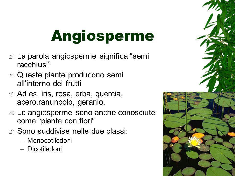 Angiosperme La parola angiosperme significa semi racchiusi