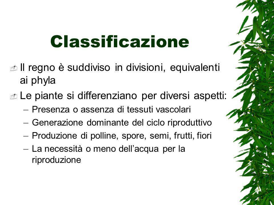 Classificazione Il regno è suddiviso in divisioni, equivalenti ai phyla. Le piante si differenziano per diversi aspetti: