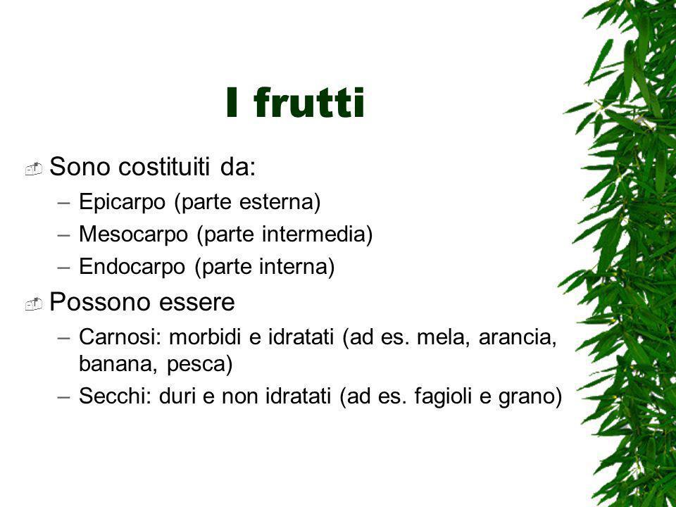 I frutti Sono costituiti da: Possono essere Epicarpo (parte esterna)