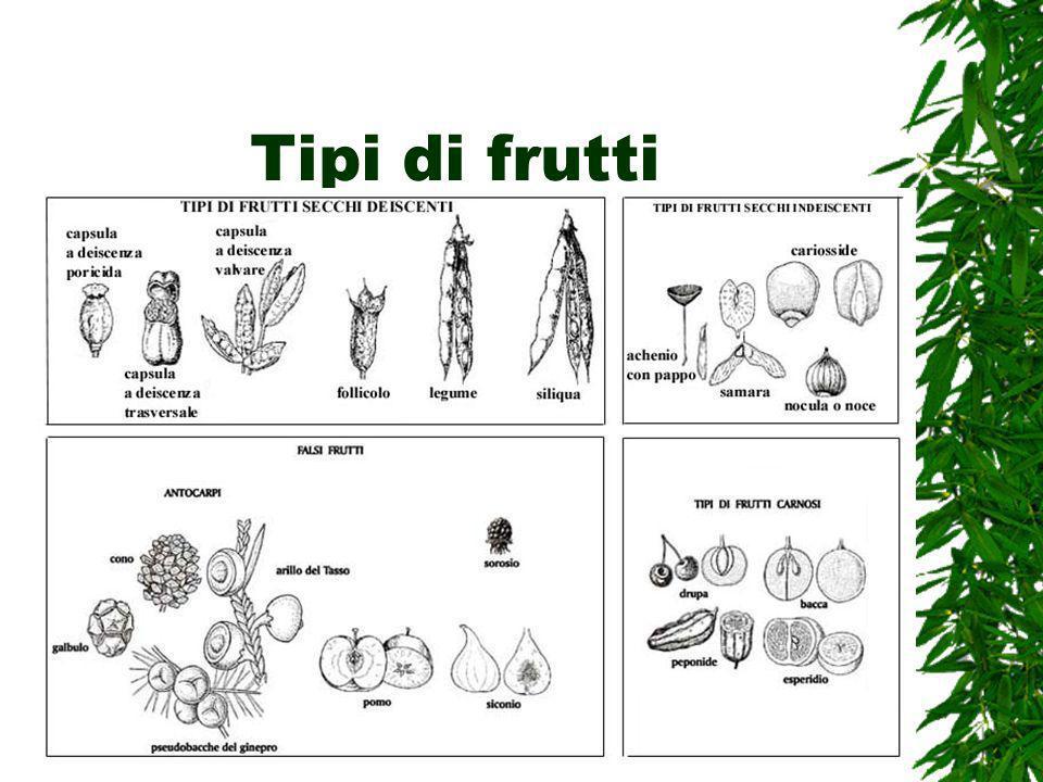 Tipi di frutti