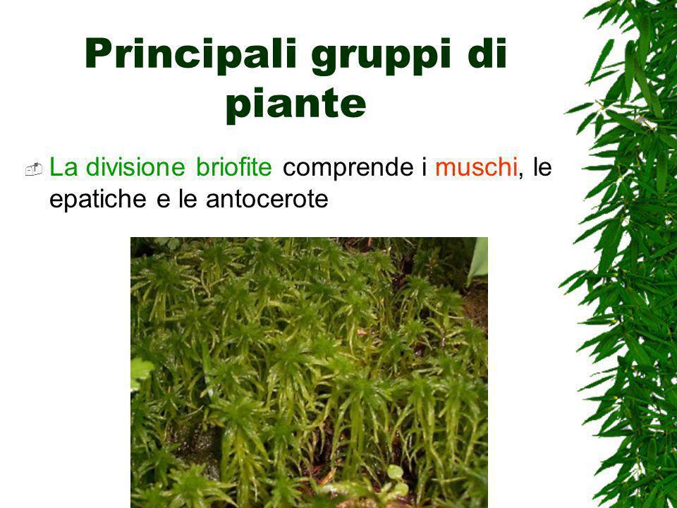 Principali gruppi di piante