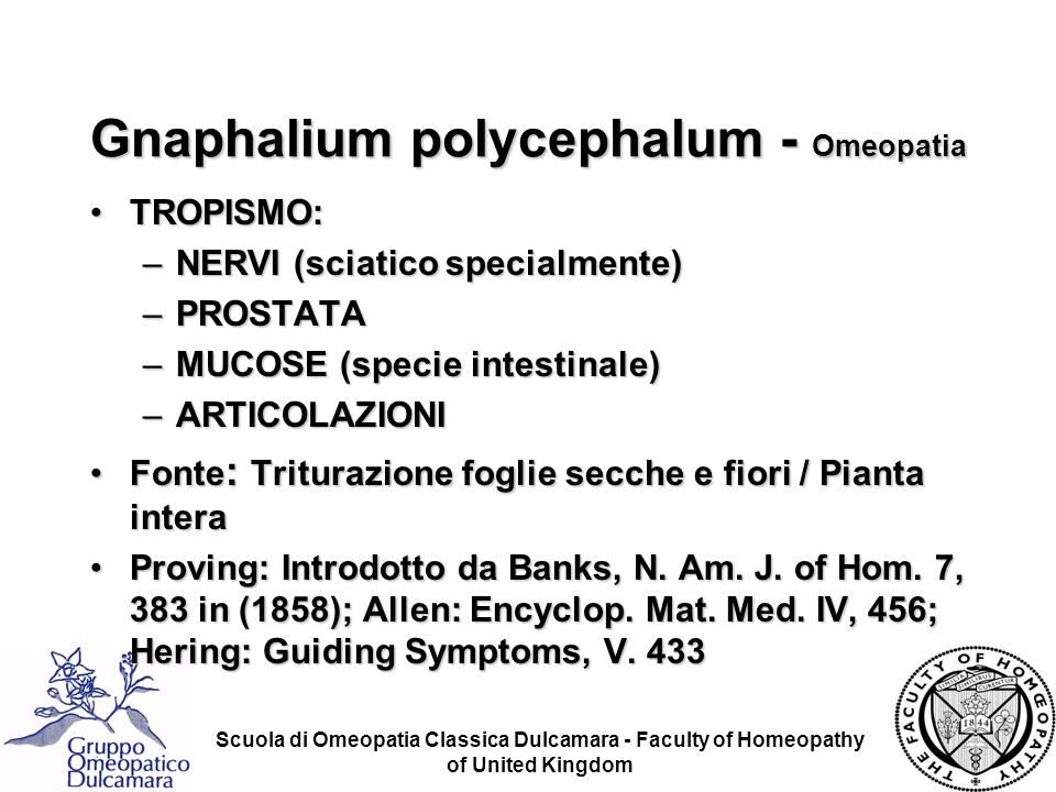 Gnaphalium polycephalum - Omeopatia