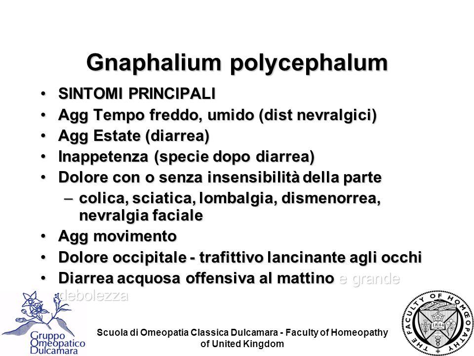 Gnaphalium polycephalum