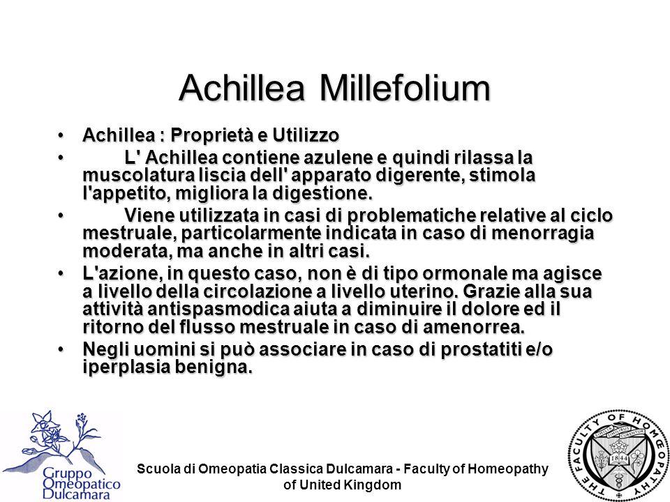 Achillea Millefolium Achillea : Proprietà e Utilizzo