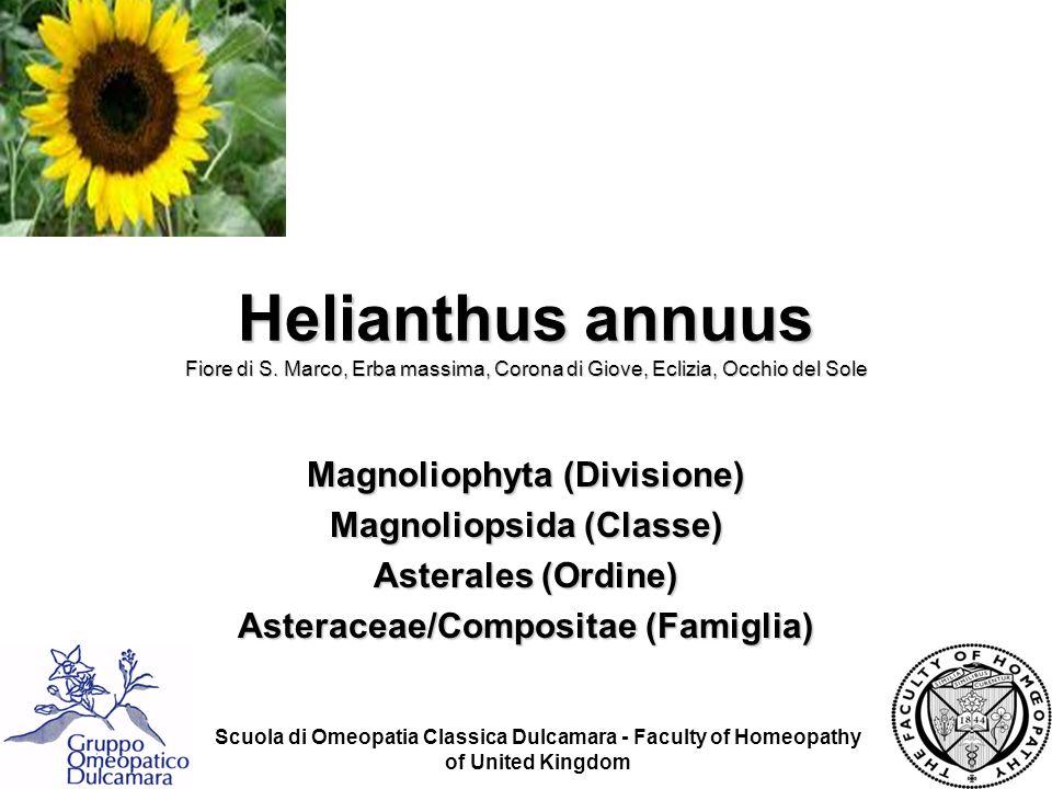 Helianthus annuus Fiore di S