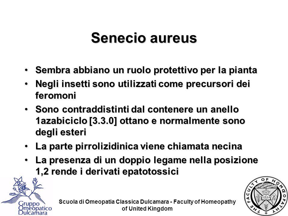 Senecio aureus Sembra abbiano un ruolo protettivo per la pianta