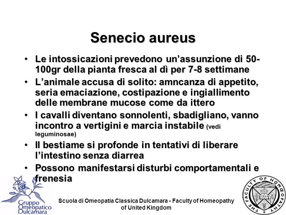 Senecio aureus Le intossicazioni prevedono un'assunzione di 50-100gr della pianta fresca al dì per 7-8 settimane.