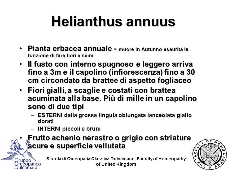 Helianthus annuus Pianta erbacea annuale - muore in Autunno esaurita la funzione di fare fiori e semi.
