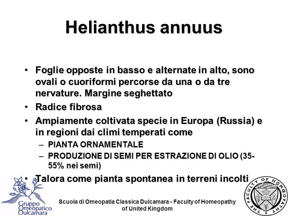 Helianthus annuus Foglie opposte in basso e alternate in alto, sono ovali o cuoriformi percorse da una o da tre nervature. Margine seghettato.