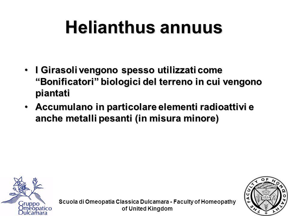 Helianthus annuus I Girasoli vengono spesso utilizzati come Bonificatori biologici del terreno in cui vengono piantati.
