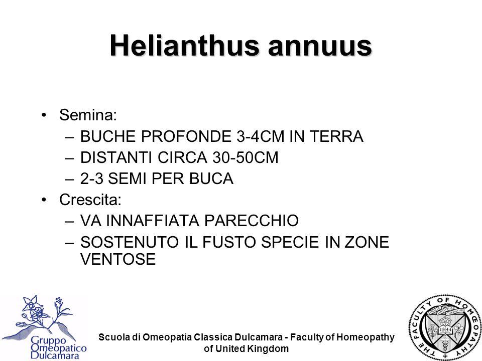 Helianthus annuus Semina: BUCHE PROFONDE 3-4CM IN TERRA