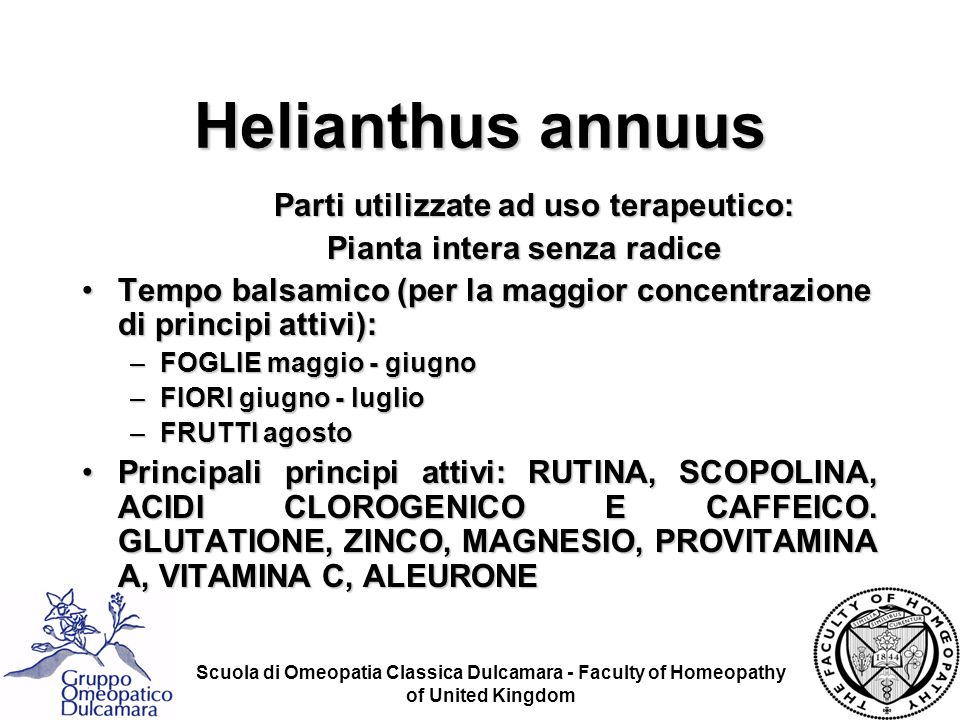 Helianthus annuus Parti utilizzate ad uso terapeutico: