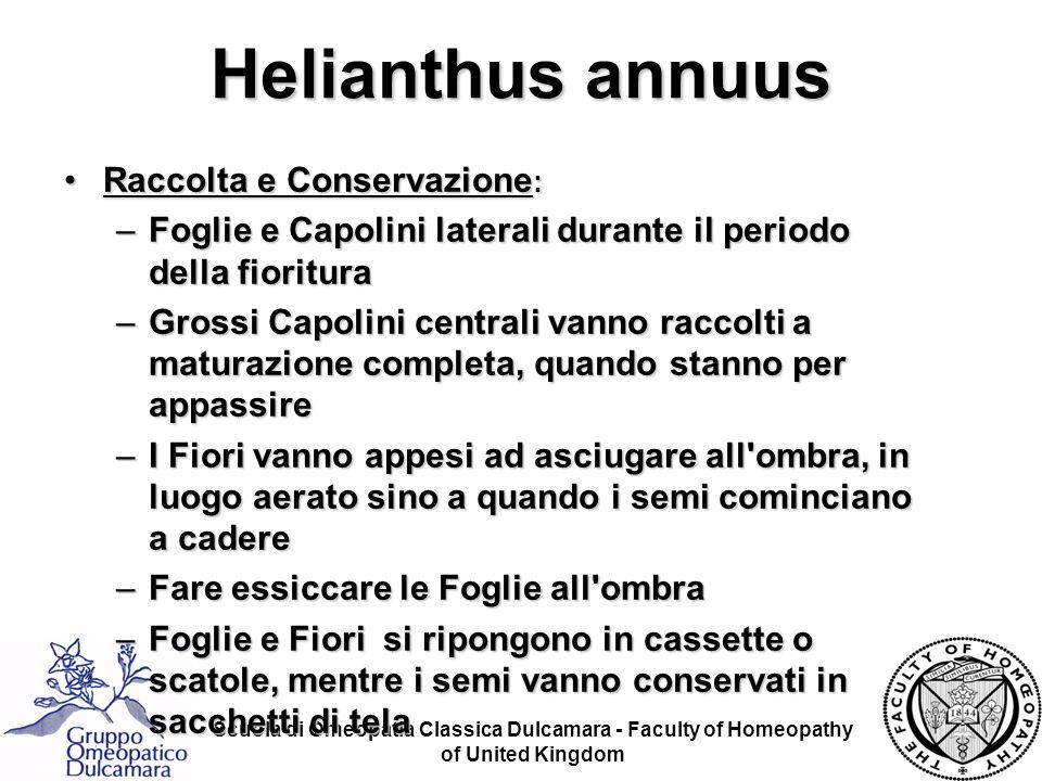 Helianthus annuus Raccolta e Conservazione: