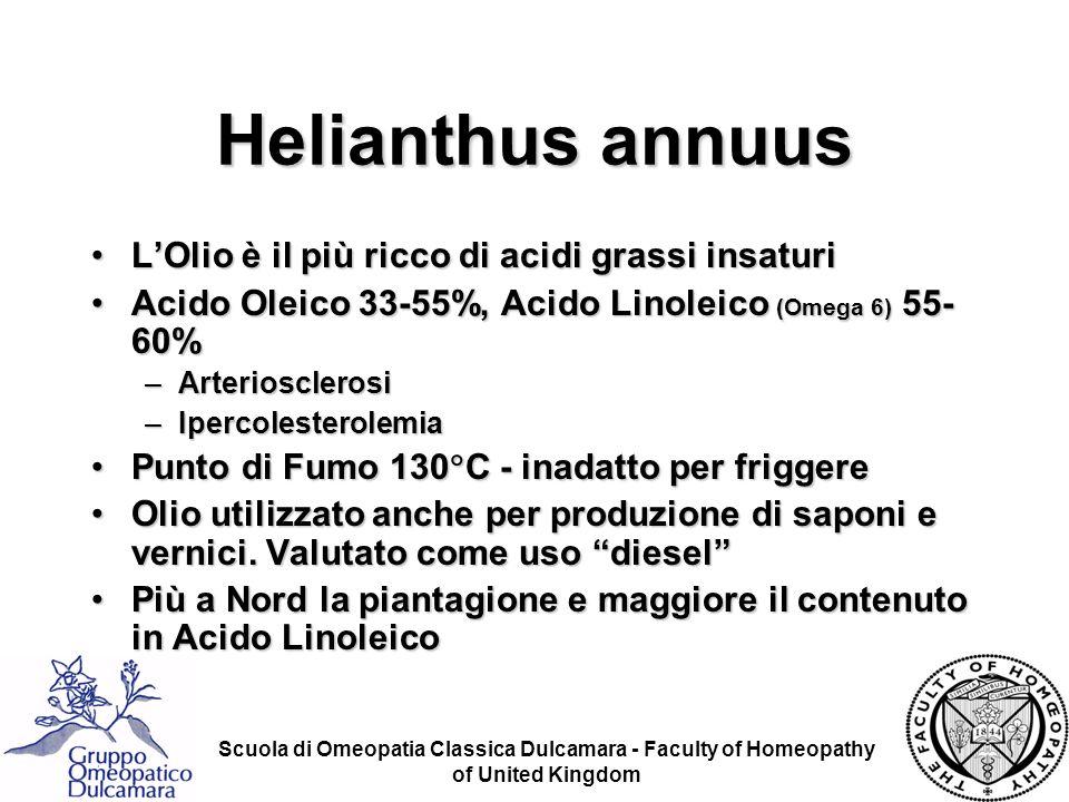 Helianthus annuus L'Olio è il più ricco di acidi grassi insaturi