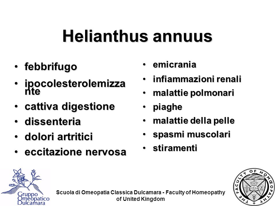 Helianthus annuus febbrifugo ipocolesterolemizza nte