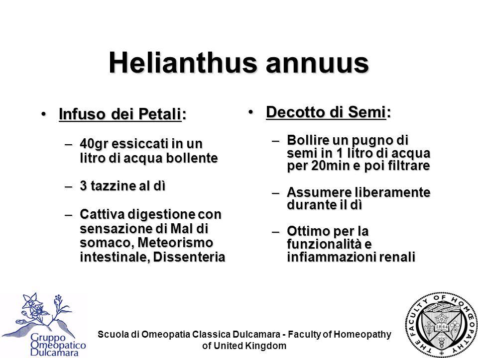 Helianthus annuus Infuso dei Petali: Decotto di Semi: