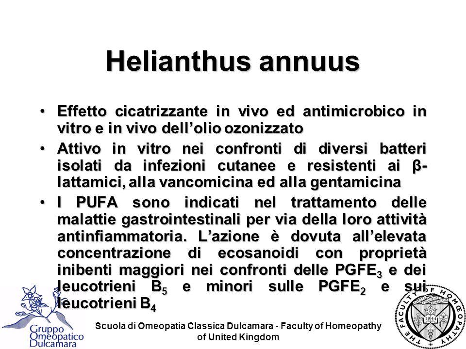 Helianthus annuus Effetto cicatrizzante in vivo ed antimicrobico in vitro e in vivo dell'olio ozonizzato.