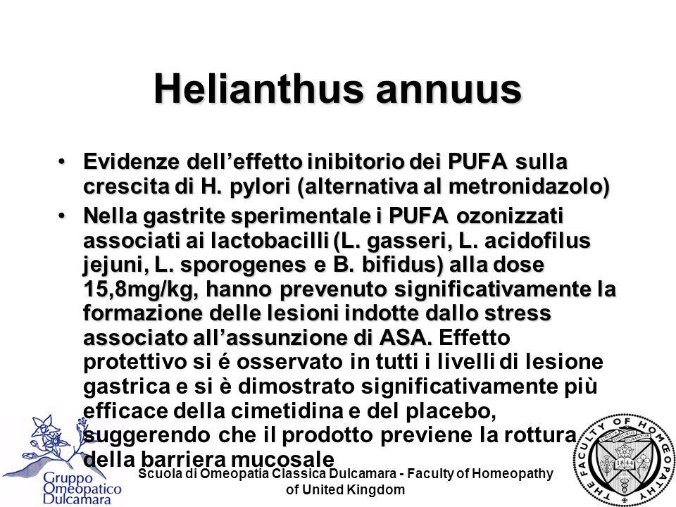 Helianthus annuus Evidenze dell'effetto inibitorio dei PUFA sulla crescita di H. pylori (alternativa al metronidazolo)
