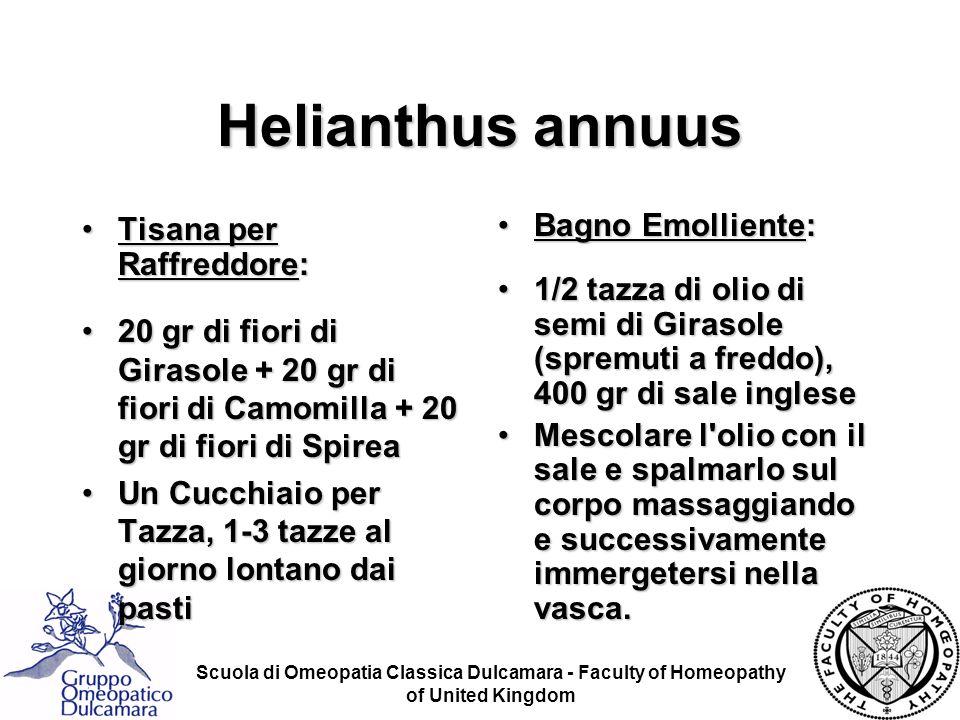 Helianthus annuus Tisana per Raffreddore:
