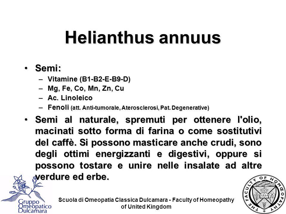 Helianthus annuus Semi: