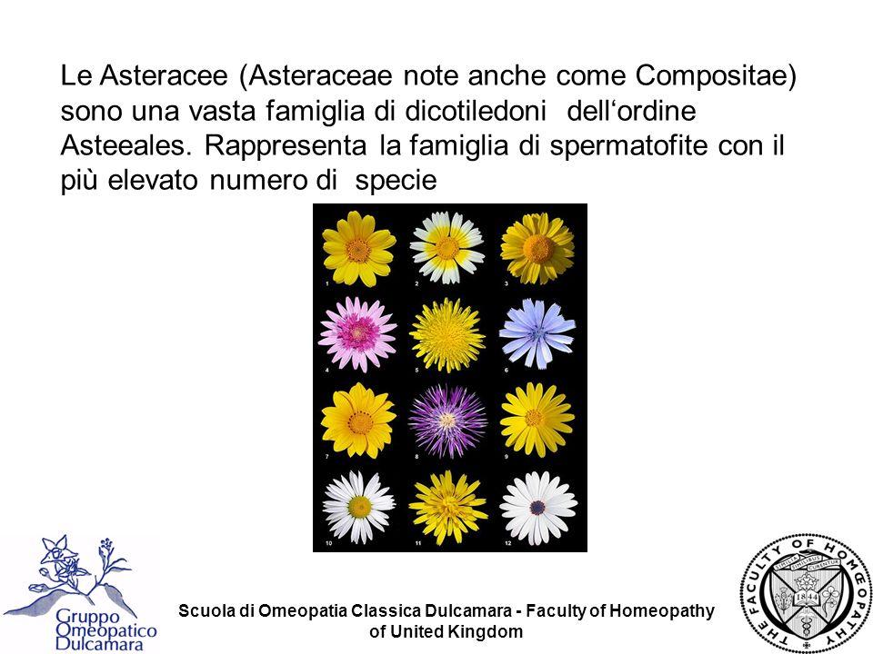 Le Asteracee (Asteraceae note anche come Compositae) sono una vasta famiglia di dicotiledoni dell'ordine Asteeales. Rappresenta la famiglia di spermatofite con il più elevato numero di specie