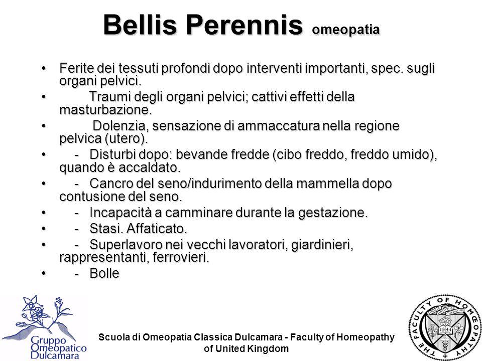 Bellis Perennis omeopatia