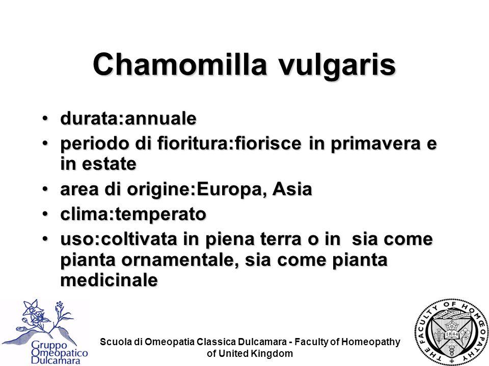 Chamomilla vulgaris durata:annuale