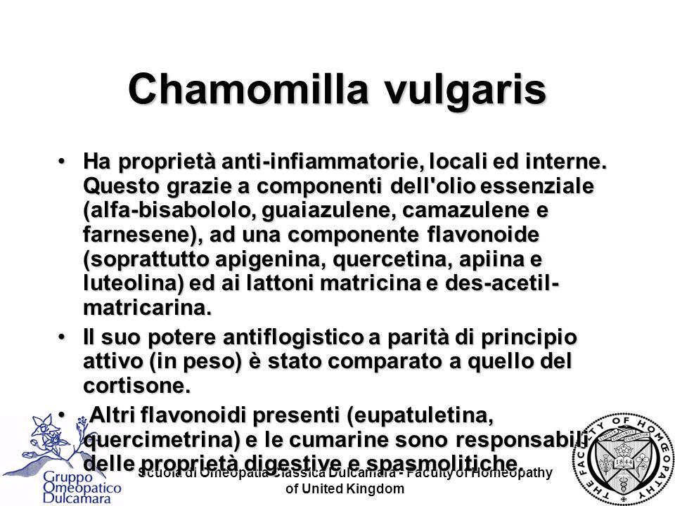 Chamomilla vulgaris