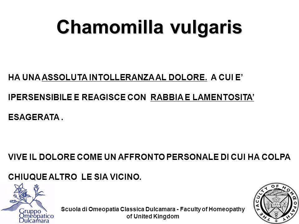 Chamomilla vulgaris HA UNA ASSOLUTA INTOLLERANZA AL DOLORE. A CUI E' IPERSENSIBILE E REAGISCE CON RABBIA E LAMENTOSITA' ESAGERATA .