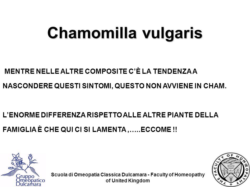 Chamomilla vulgaris MENTRE NELLE ALTRE COMPOSITE C'È LA TENDENZA A